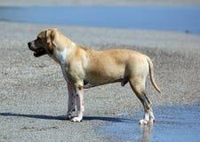 Perro lindo que juega en el océano, las imágenes de la acción del coco de persecución canino en el mar y la playa fotografía de archivo