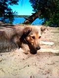 Perro lindo que miente en la arena en el banco del río Fotos de archivo