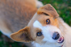 Perro lindo que mira para arriba Imagenes de archivo