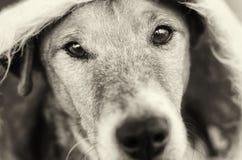 Perro lindo que oculta bajo theblanket Foto de archivo