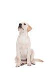 Perro lindo que se sienta solamente y que mira para arriba Imágenes de archivo libres de regalías