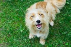 Perro lindo y emocionado en la hierba imagenes de archivo