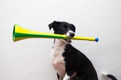 Perro listo para el mundial Imagen de archivo
