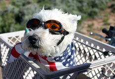 Perro listo para el paseo de ATV Fotografía de archivo