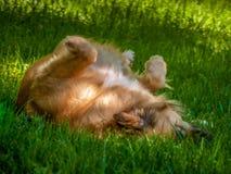 Perro loco Fotos de archivo