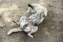 Perro loco Fotografía de archivo