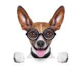Perro loco mudo Imágenes de archivo libres de regalías