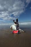 Perro lounging en la playa imagenes de archivo