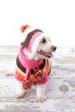 Perro magnífico Imagen de archivo libre de regalías