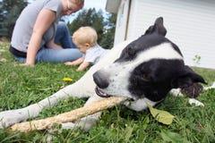 Perro, mama, y bebé Imagen de archivo libre de regalías
