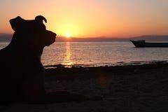 Perro, mar, salida del sol Fotos de archivo libres de regalías