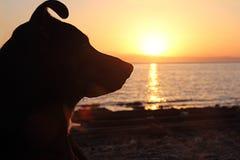 Perro, mar, salida del sol Fotos de archivo
