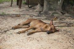 Perro marrón cansado que miente en la tierra Foto de archivo