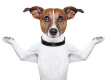 Perro Meditating Fotos de archivo libres de regalías