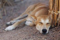 Perro mestizo alegre Imagen de archivo libre de regalías