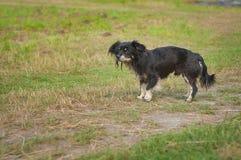 Perro mestizo en cierre de la cara para arriba Foto de archivo