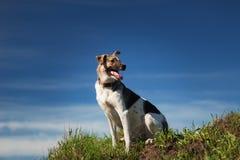 Perro mestizo feliz del retrato que se sienta en campo verde soleado y que mira a un lado Fondo del cielo azul y de las nubes fotos de archivo libres de regalías