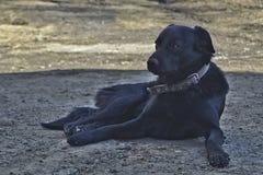 Perro mestizo negro en un cuello que descansa en la sombra foto de archivo libre de regalías