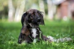 Perro mezclado adorable de la raza que presenta al aire libre en verano foto de archivo