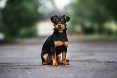 Perro mezclado adorable de la raza que presenta al aire libre imagenes de archivo