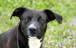 Perro mezclado blanco y negro de la raza imagen de archivo libre de regalías