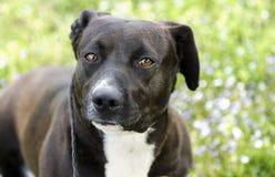 Perro mezclado blanco y negro de la raza fotografía de archivo