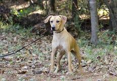 Perro mezclado cur de la raza del perro del moreno Fotografía de archivo