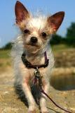 Perro mezclado de la casta Fotografía de archivo