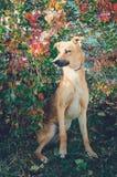 Perro mezclado de la casta fotografía de archivo libre de regalías