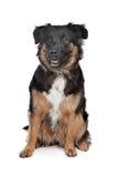 Perro mezclado de la casta imágenes de archivo libres de regalías