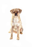 Perro mezclado de la casta imagenes de archivo