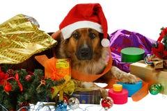 Perro mezclado de la casta con los regalos de Navidad fotografía de archivo libre de regalías
