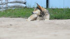 Perro mezclado de la raza cerca de la granja metrajes