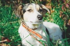Perro mezclado de la raza con un correo fotografía de archivo libre de regalías