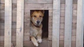 Perro mezclado de la raza en la cabina en la yarda almacen de metraje de vídeo