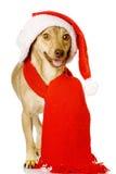 Perro mezclado de la raza en el sombrero rojo de Papá Noel de la Navidad Aislado Imagen de archivo