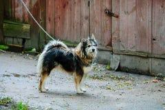 Perro mezclado de la raza en la yarda imagen de archivo libre de regalías