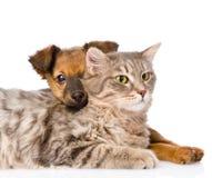Perro mezclado de la raza que abraza el gato Aislado en el fondo blanco foto de archivo