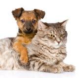 Perro mezclado de la raza que abraza el gato Aislado en el fondo blanco fotografía de archivo