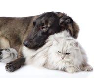 Perro mezclado de la raza y gato persa junto imagen de archivo libre de regalías