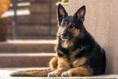 Perro mezclado de mirada fiel de la raza imagenes de archivo