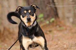 Perro mezclado pastor de la raza foto de archivo