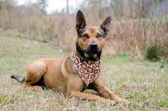 Perro mezclado pastor de la raza imagen de archivo