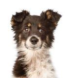 Perro mezclado retrato de la casta Aislado en el fondo blanco fotos de archivo libres de regalías