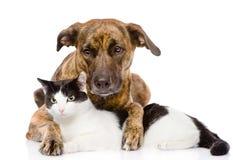 Perro mezclado y gato de la raza que mienten junto Aislado foto de archivo libre de regalías