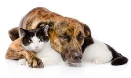 Perro mezclado y gato de la raza que mienten junto Aislado en blanco foto de archivo libre de regalías