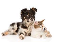 Perro mezclado y gato de la raza que miran lejos En blanco fotos de archivo libres de regalías