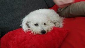 Perro mimoso Fotografía de archivo libre de regalías