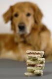 Perro, mirando sus bisquits Imágenes de archivo libres de regalías