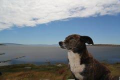 Perro modelo Fotos de archivo